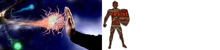 WELLNESS & LIFESTYLE - Unterstützt die Immunabwehr - Stärken Sie Ihr Immunsystem